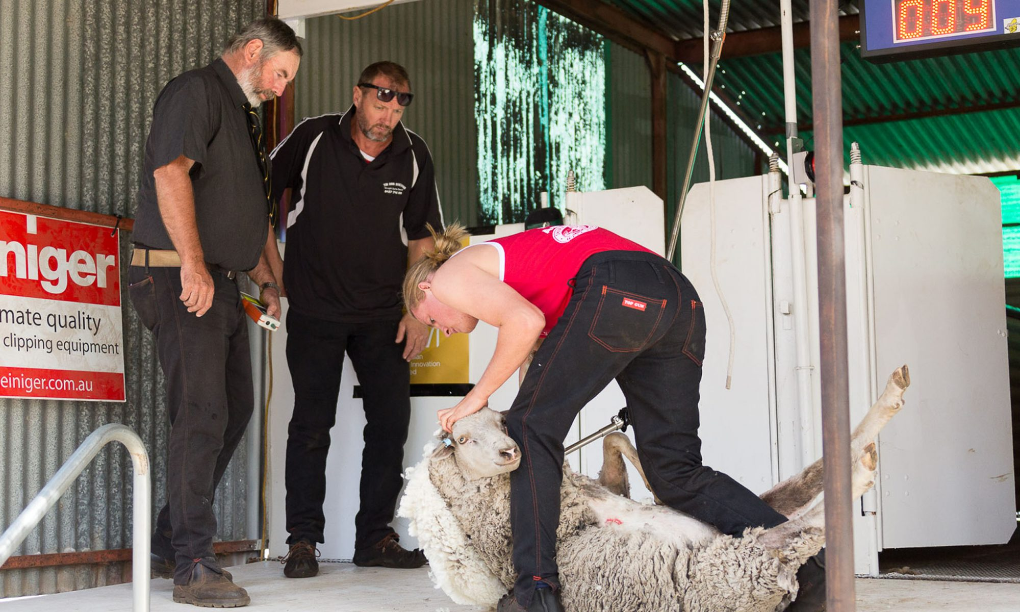 photo of two judges watching shearer competing in Darkan Sheepfest shearing competition. photo by Caro Telfer, Photographer